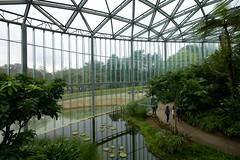 Greenhouse (Frank Fujimoto) Tags: tokyo japan water reflection architecture