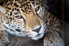 Tika 1 (fotodoc61) Tags: animals