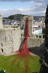 WW1 Weeping Window poppies on show at Caernarfon Castle October 2016 (Martin Pritchard) Tags: ww1 weeping window poppies show caernarfon castle october 2016 royal welch fusiliers