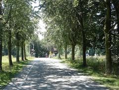 spoorwegovergang bij Vechten (bcbvisser13) Tags: bomen laan landweg spoorwegovergang fietser panorama symetrie pov vechten gembunnik provutrecht nederland eu perspectief