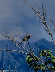 Sakurajima moments (Vagabundina) Tags: japan nikond60 sakurajima kagoshima kyushu volcano nature green landscape