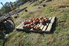 IMG_0914 (hammonton_garden) Tags: 2016 communitygarden fall hammonton southjersey nj gardenstate