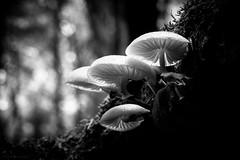 mushrooms (rich lewis) Tags: mono monochrome blackandwhite macro macrophotography mushroom nature richlewis