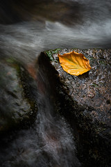 Stranded (Peter Henry Photography) Tags: leaf water river flow autumn colour wet