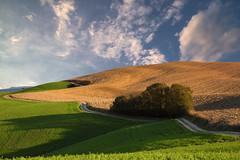 val d'orcia XX (explore) (Guido Pezzatini) Tags: field countryroad siena italy asciano toscana cretesenesi travel