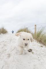 Beto (sairacaz) Tags: perro dog pet puppy playa beach canon eos70d samyang 8mm vigo galicia