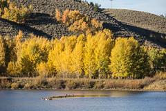 The smell of Autumn (E.K.111) Tags: nature lake grandteton autumn yellow outdoors