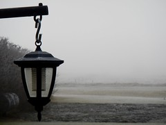 Heavy fog (Jeannette Greaves) Tags: fog farm 2016 poor visibility north yard home lantern garden