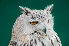 _ATI4894 (Aitzol Arruabarrena) Tags: cabarceno d800 tokina 300 animals animaliak