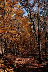7Q7A6207 (armincreates) Tags: nature fall colors trees lake mountains hike dog puppy beauty trail panorama sunset cows farm wisconsin illinois usa walk