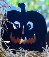 Macro Mondays - backlit (shireye) Tags: macromondays macro monday pumpkin backlit rosedale toronto ontario nikon d610 ff fullframe fx 24120