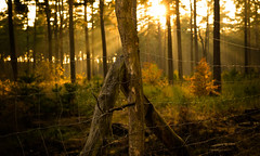 Fenced (--Conrad-N busy in december--) Tags: fence forest friday fog a7rm2 sony hff