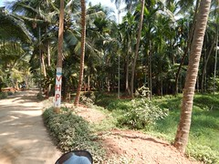 Villages Near Calicut Kerala Photography By CHINMAYA M (19)