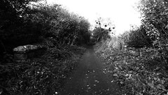 Railway trackbed between Burniston and Cloughton (Scarborough - Whitby  old railway) (dave_attrill) Tags: scarborough whitby disused line trackbed route cinder path dr beeching report 1965 ner north eastern railway october 2016
