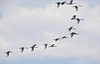 over the Okawango Delta (me*voilà) Tags: okawangodelta botswana delta birds cranes flight action onblue