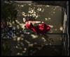 H51-B0017461 copy (mingthein) Tags: thein onn ming photohorologer mingtheincom availablelight gravitation is relative project pole dance czech republic street prague anastacia akentyeva hasselblad h5d50c medium format 645 h5d hc 32150 n 150f32n