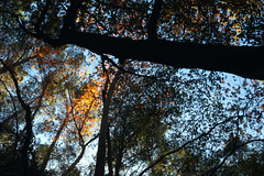 Troodos Geopark (27) (Polis Poliviou) Tags: polispoliviou polis poliviou   cyprus cyprustheallyearroundisland cyprusinyourheart yearroundisland zypern republicofcyprus  cipro  chypre   chipir chipre  kipras ciprus cypr  cypern kypr  sayprus kypros polispoliviou2016 troodosgeopark troodos mediterranean nicosia valley life nature forest historical park trekking hiking winter walking pine pines prodromos limassol paphos fall autumn geopark kakopetria