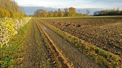 balade Benfeld (Randalfino) Tags: 2016 novembre16 balade ried alsace benfeld marche randonne paysage landscape labour champ field