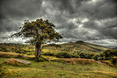 One tree moor (Anthony Plancherel) Tags: category dartmoor devon england landscape places travel sky clouds greyclouds cloudysky land landscapephotography travelphotography grass moor moorland valley combe dale tree greenery openspace nature naturalspace nationalpark heather gauze light lightrays canon70d canon1585mm canon outdoor hill vale vales hills bleak barren stone rock mounds tor horizon plant cloud serene