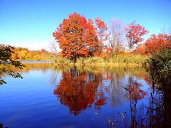 Fall Lake Mirror (dimaruss34) Tags: newyork brooklyn dmitriyfomenko image fall autumn sky clouds prospectpark foliage reflection