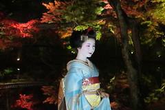 Maiko20161119_06_05 (kyoto flower) Tags: kodaiji temple fukuno kyoto maiko 20161119      noblesseoblige