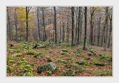 - DSC_0864 (Ferruccio Jochler) Tags: autumn wood foliage vegetation forest nature environment