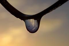 Bevroren (Omroep Zeeland) Tags: nachtvorst zonsopkomst