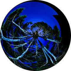 the claw (pbo31) Tags: sanfrancisco california blue trees summer color circle globe nikon distorted august goldengatebridge claw bayarea planet bluehour polar polarized presidio 2015 boury pbo31 d810