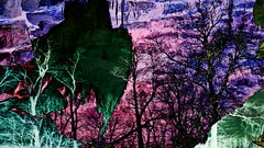 Mystery Trees Blue (bob3toes) Tags: trees abstract art naked mystical artography 3toes