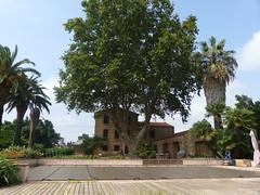 cetim-Propriete-Jardin-arbore (cetim.immo66) Tags: jardin piscine cetim proprt