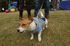 """Dogs, dog park, richmond • <a style=""""font-size:0.8em;"""" href=""""http://www.flickr.com/photos/31682982@N03/21901254404/"""" target=""""_blank"""">View on Flickr</a>"""