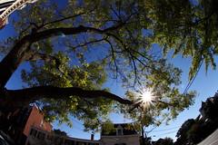 Sun rays (Benny2006) Tags: street sky sun tree alexandria virginia angle wide perspective fisheye rays oldtown