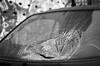 splitscreen (chipsmitmayo) Tags: auto blackandwhite film broken smart car hammer analog silver nikon open f14 85mm f100 100 windshield nikkor schwarzweiss münster 129 kaputt silber westfalen hawerkamp splitter scherben selfdeveloped scheibe schaden offen windschutzscheibe adox galerien kleinbild einschlag selbstentwickelt silvermax