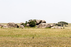 201503041243_TZ_Mara_Serengeti National Park.jpg (matthewbelk) Tags: africa tanzania events safari mara serengeti tz kopje 2015