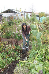 Nov_allotment (8)