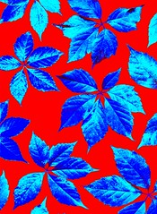 56948.10 Parthenocissus quinquefolia (horticultural art) Tags: leaves pattern psychedelic virginiacreeper parthenocissus parthenocissusquinquefolia horticulturalart