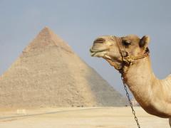 Camel and the Pyramids, Egypt (shaire productions) Tags: world travel sculpture history monument animal photo desert image egypt picture landmark camel photograph egyptian luxor mythology ancientegypt saharadesert