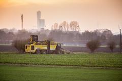 3U4A1526 (Bad-Duck) Tags: vinter mat ropa hst ker betor maskiner kvll skrd flt jordbruk grda lantbruk rstid livsmedel sockerbetor fltarbete livsmedelsproduktion betupptagare omstndigheter