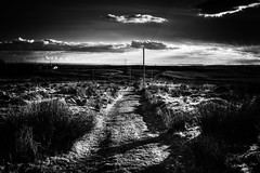 Bleak Beautiful and Welsh (Missy Jussy) Tags: bleak beauty shadows light contrasts blackwhite bw blackandwhite wales garndolbenmaen landscape land sheep fields sky clouds pole pylon horizon canon cannon600d atmosphere moody moodylandscapes littledoglaughednoiret