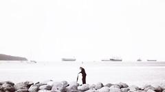 @jared_lo_fi_eye (Jared Price) Tags: english bay vancouver bc canada man beach walk view sunday sea ships tankers