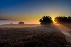 Lead the way! (Jantje1972) Tags: posbank natuur zonsopkomst licht nederland mist heide heather sunrise rays zonnestralen nature
