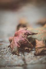 Autumn (klausi1983) Tags: autumn herbst colour farben sun light bokeh street city red