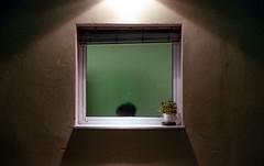 In & Out (Minchioletta) Tags: pentaxmesuper smcpentaxa50mm smcpentaxa50mmf17 50mmlens fujisuperia400 fujisuperiaxtra400 finestra window pianta plant woman donna c41 analogicait lomographyandvintagecameras