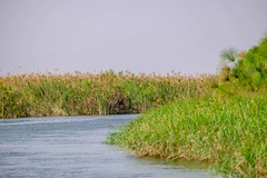 20160910 043 Okavango River (scottdm) Tags: 2016 africa boat botswana intrepid okavango okavangopanhandle okavangoriver papyrus river september travel northwestdistrict bw