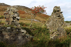 Birth (K. Sakulku) Tags: ireland ire water landscape beautiful atmosphere donegal countydonegal old ruin ruins structure derelict birth tree newlife