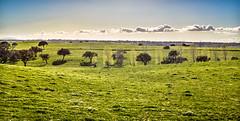 Ajuda Velha (Marcel Weichert) Tags: ajudavelha alentejo europe farm fazenda flowersplants landscape portugal vendasnovas vora pt