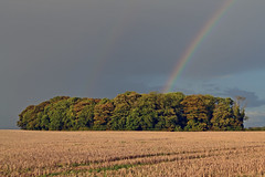 Rainbow at sunset (AndyorDij) Tags: leaspinney rainbow trees tree sunset hedgerow fields field empingham england rutland uk unitedkingdom 2016 autumn