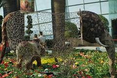 DSC03799 (oliveplum) Tags: tribaltempofloraldisplay gardensbythebay bokeh flowerdome olympusomsystemzuikomcautot12f85mm sony singapore marinabay art imagination