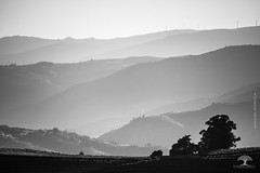 An excess of nature (Adrega) Tags: ifttt 500px nature photograph douro ervedosa do blackandwhite black white mountain mountains trees grapery vineyard wine vine came adrega manuel terracing duero valley alto regio vinhateira