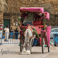 Well Earned Break (Sue_Hutton) Tags: asilah maroc morocco november2016 autumn carriage feeding horse northernmorocco